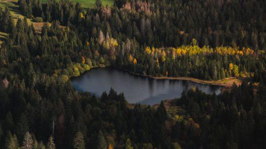 Vue sur une forêt et un lac au Jura